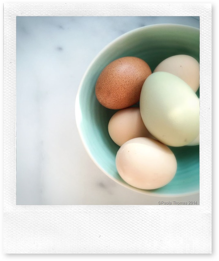 Happy April Dyed Eggs photography by www.paolathomas.com