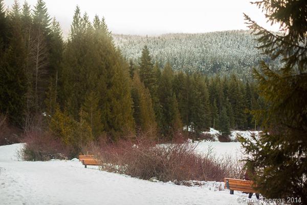 Lost Lake, Whistler  British Columbia, Canada  Photography www.paolathomas.com